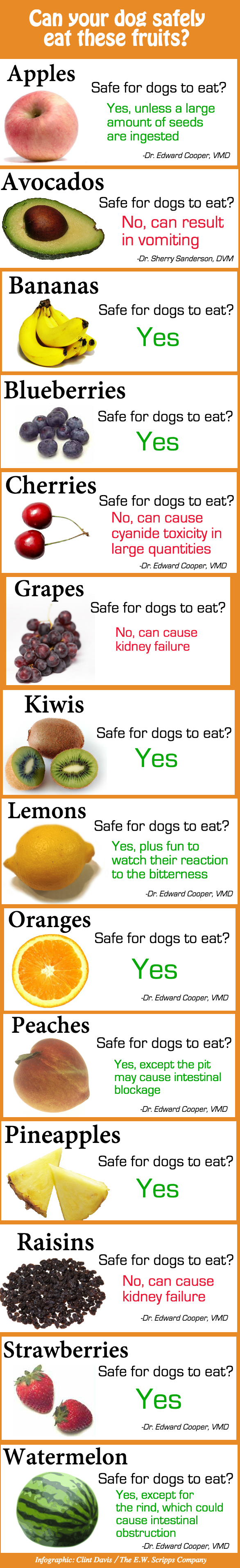 What Fruit Dog Cannot Eat