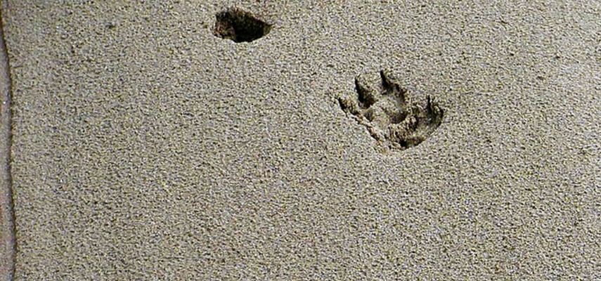 Guide to Animal Tracks