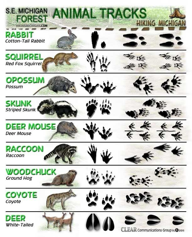 guide  animal tracks tfe times