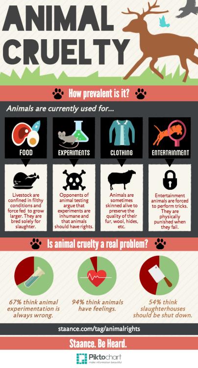Animal Cruelty: How Prevalent Is It?